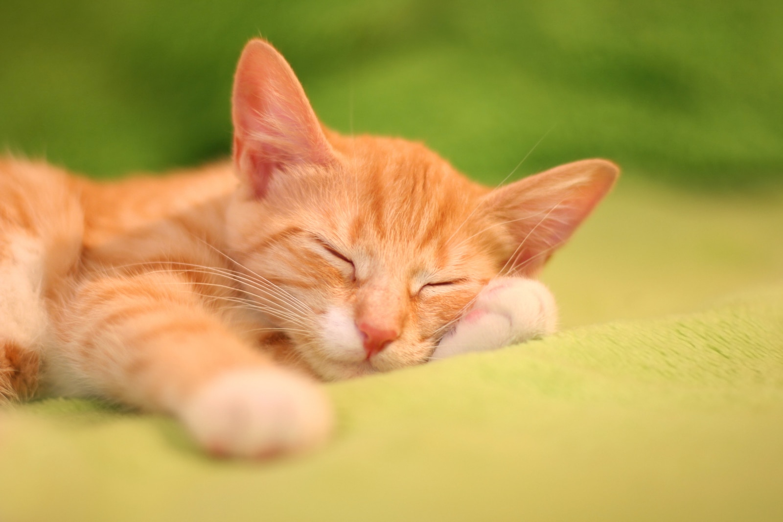 Small orange tabby kitten sleeps on a green blanket.