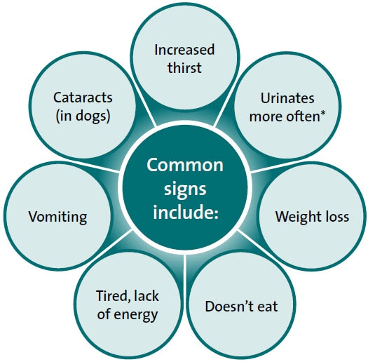 Diabetes common signs