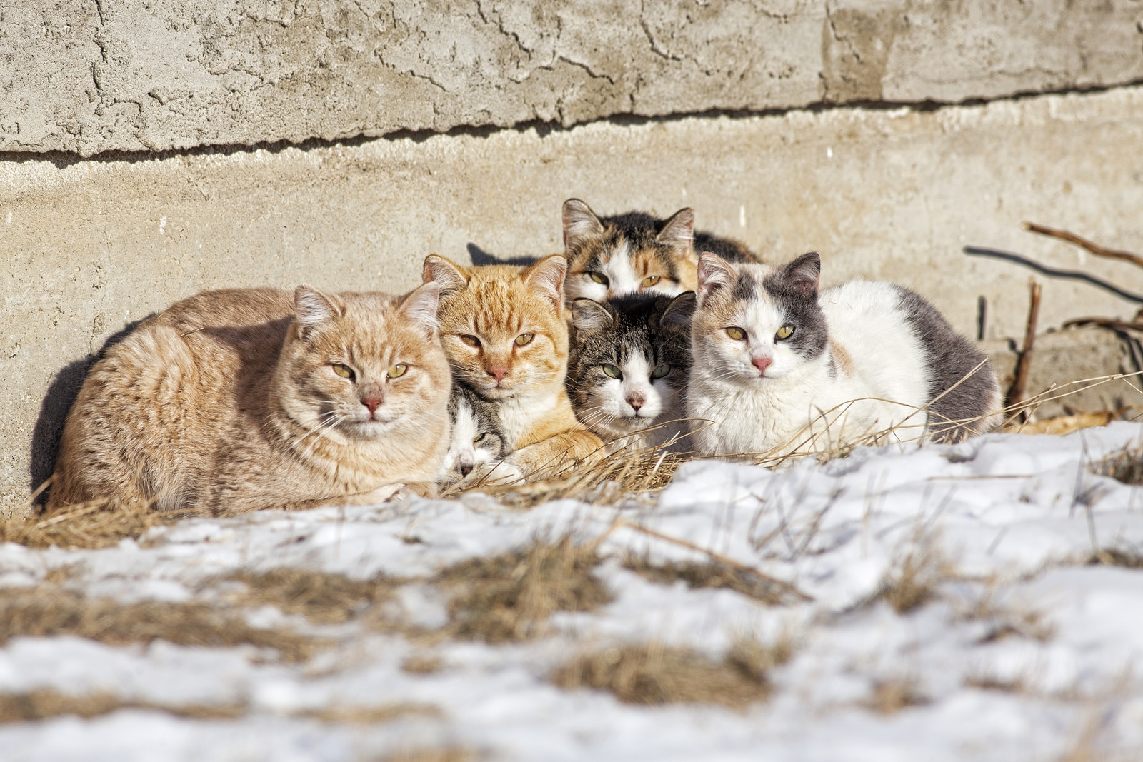 A group of feral cats huddled together to keep warm near the wall of an old abandoned home. Taken during -28C weather.** Note: Shallow depth of field