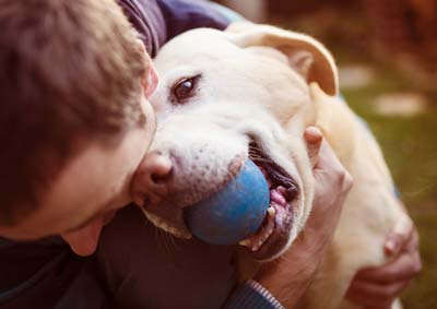 Man hugs a yellow lab with a blue ball in his mouth.