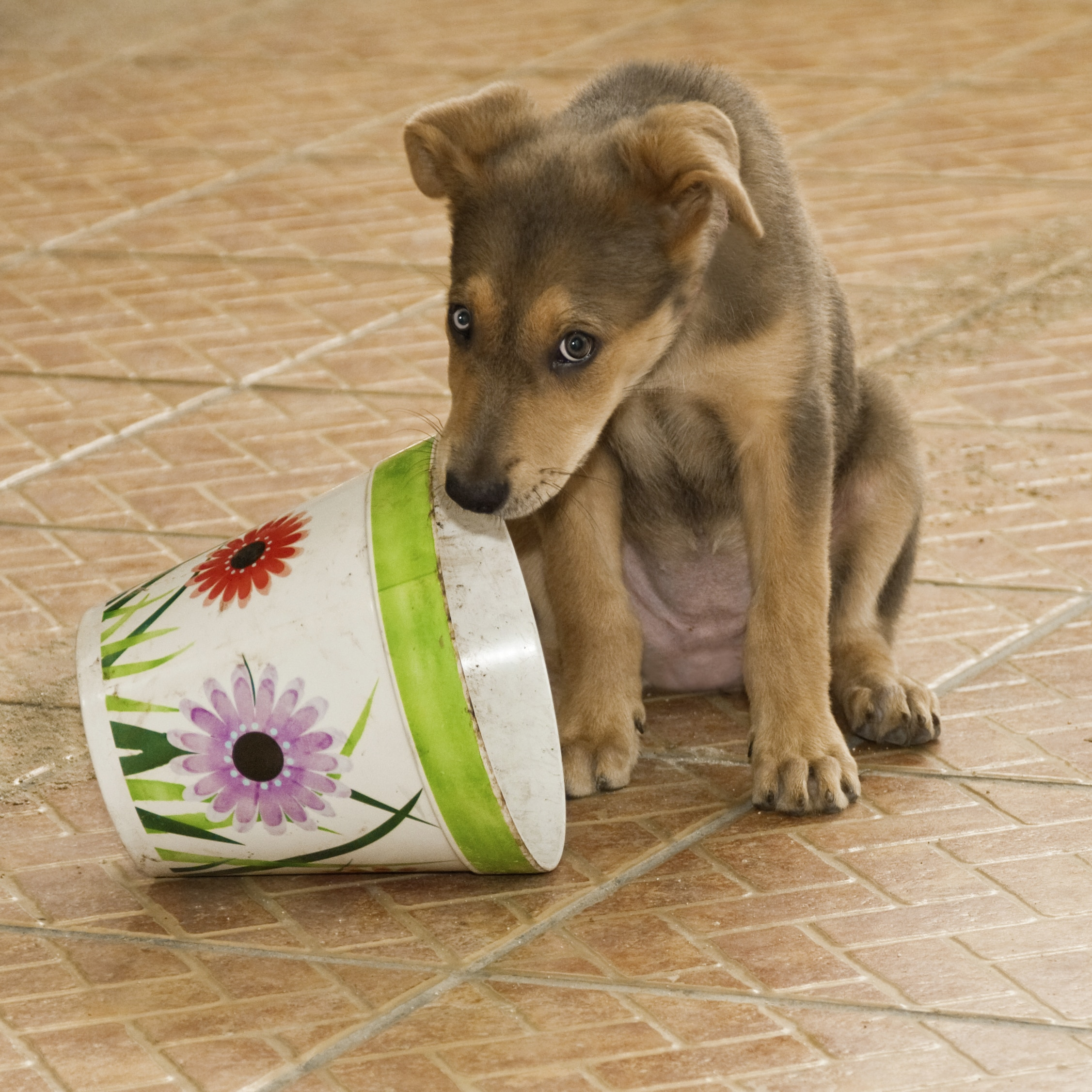 Puppy looking guilty next to flowered bucket.