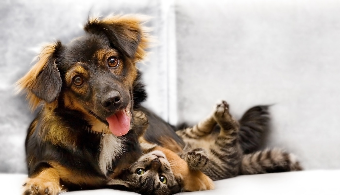 Puppy and kitten playing on a couch