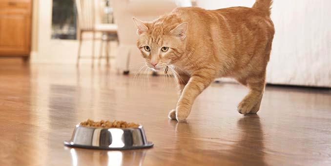 How Much & How Often to Feed Your Kittens | Hill's Pet