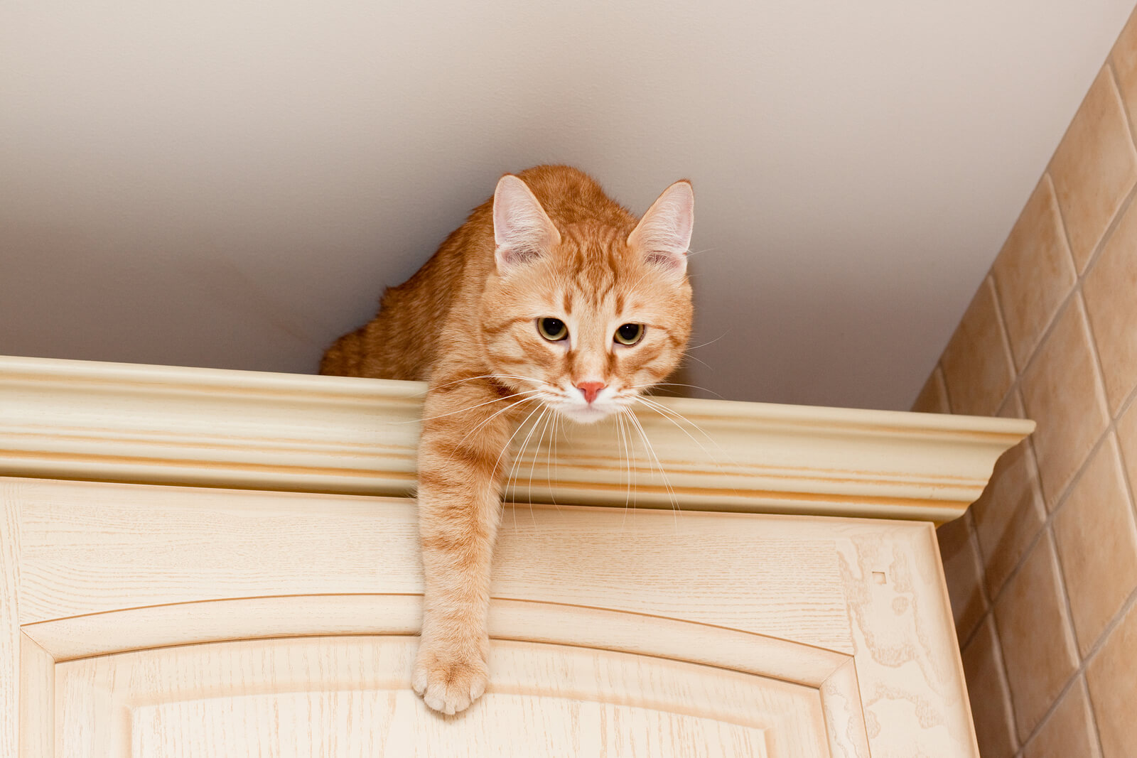 A young ginger tabby cat on top of a kitchen cabinet.