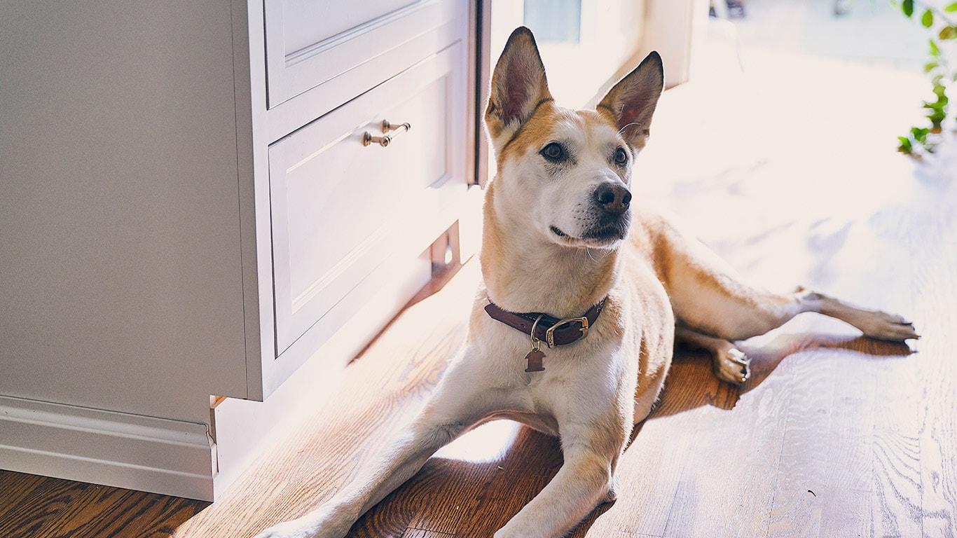 Hills Pet Nutrition Dog Cat Food Transforming Lives Jet Mate Wiring Diagram Feeding