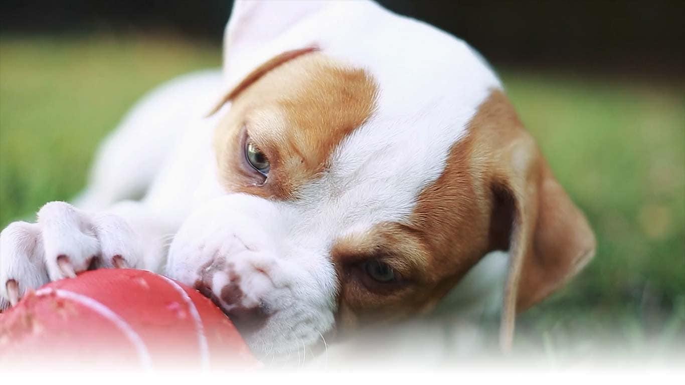 Hills Pet Nutrition Dog Cat Food Transforming Lives